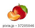 イラスト イラストレーション 食のイラスト 37205046