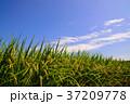 青空 稲 空の写真 37209778