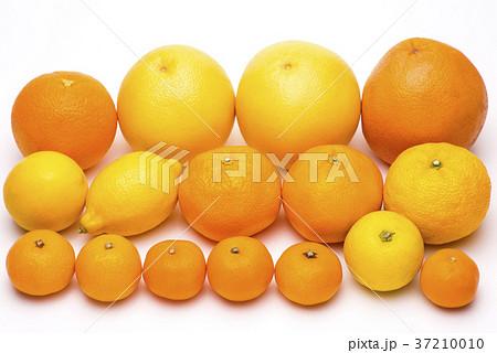 白背景の色々な種類の柑橘類 37210010