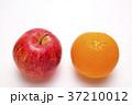 リンゴ 果物 フルーツの写真 37210012