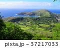 自然 ハワイ 風景の写真 37217033