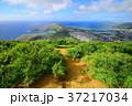 自然 ハワイ 風景の写真 37217034
