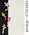 鯉 錦鯉 モダンのイラスト 37221604