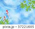 和を感じる背景素材 (鯉、水面、青紅葉) 37221605