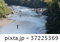 鮎の友釣り風景 37225369