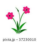 花 花束 ベクトルのイラスト 37230010