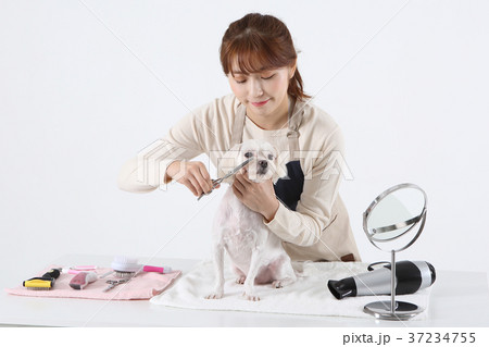 rf photo pet economy dog beautician is caring a dog 017の写真素材