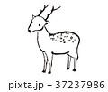 鹿 水彩画 37237986