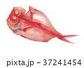 金目鯛の開き 37241454