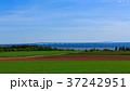 海 橋 風景の写真 37242951