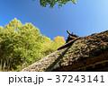 茅葺き 茅葺屋根 空の写真 37243141