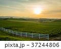 新栄の丘 北海道 夕日の写真 37244806