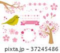 桜イラスト 37245486