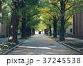 秋 東京都 大学の写真 37245538