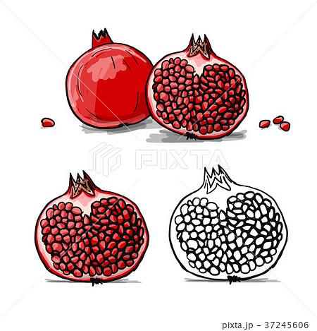 Pomegranate, sketch for your design 37245606