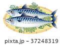 サバ 鯖 魚のイラスト 37248319