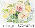 水彩画 絵 花のイラスト 37248714