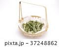 たらの芽の天ぷら 37248862