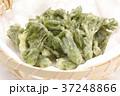 たらの芽の天ぷら 37248866