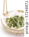 たらの芽の天ぷら 37248871