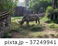 台湾の動物園のサイ 37249941