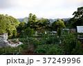 貸し農園(ホビーファーム)の風景/冬秋 37249996