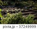 貸し農園(ホビーファーム)の風景/冬秋 37249999