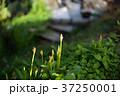 貸し農園(ホビーファーム)の風景/冬秋 37250001