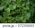 貸し農園(ホビーファーム)の風景/冬秋 37250003