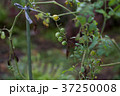 貸し農園(ホビーファーム)の風景/冬秋 37250008