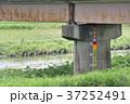 橋脚の水位計 37252491