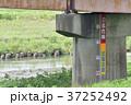 橋脚の水位計 37252492
