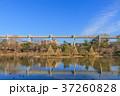 綿打池 池 風景の写真 37260828