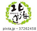 北海道 筆文字 青葉 フレーム 37262458