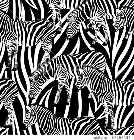 Zebra on abstract background, seamless pattern. 37267484