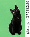 Beautiful cat of black coloring on green 37268289