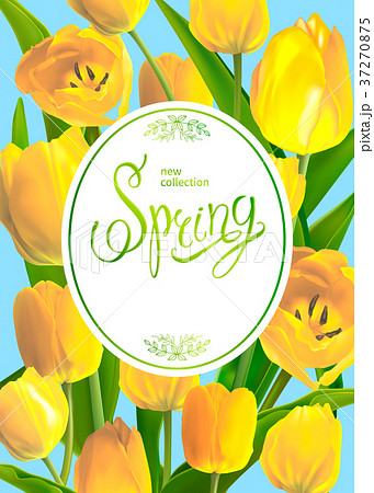 Spring bouguet of tulips 37270875