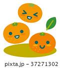 みかん 柑橘 果物のイラスト 37271302
