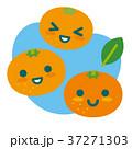 みかん 柑橘 果物のイラスト 37271303