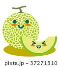 メロン マスクメロン 果物のイラスト 37271310