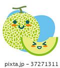 メロン マスクメロン 果物のイラスト 37271311