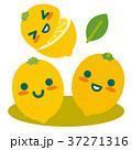 レモン 檸檬 果物のイラスト 37271316