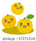 柚子 柑橘 果物のイラスト 37271318