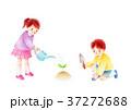 水やりする子供 37272688