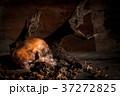 歯 骸骨 ドクロの写真 37272825