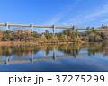 綿打池 池 風景の写真 37275299