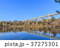 綿打池 池 風景の写真 37275301
