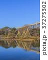 綿打池 池 冬の写真 37275302