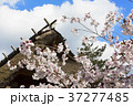 桜 青空 花の写真 37277485