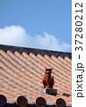 シーサー 屋根 建物の写真 37280212